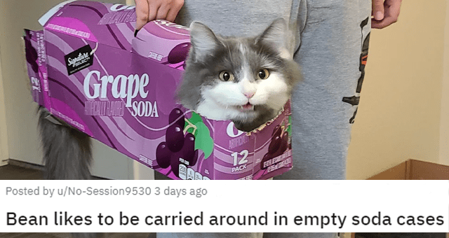 a collection of posts about cats thumbnail includes a picture of a cat being carried in a soda cardboard box 'Bean likes to be carried around in empty soda cases u/No-Session9530'