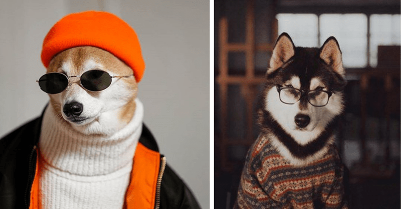 dogs wearing cool fashion