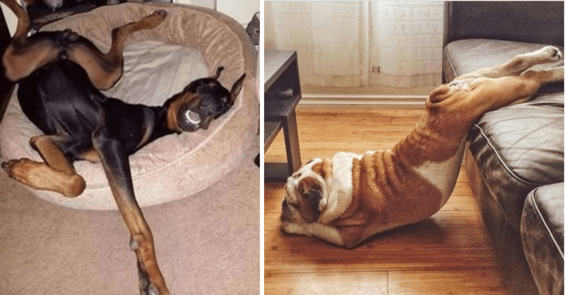 dogs sleeping in awkward positions