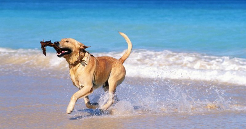 dogs list cute beach animals - 1405189