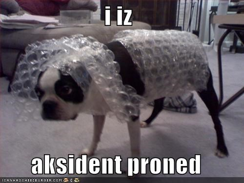 accident boston terrier bubble wrap clumsy - 1405324032