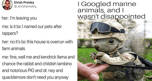 collection of animal memes for the middle of the week thumbnail includes two memes including one of a squirrel with army gear on 'Camouflage - I Googled marine anim' and another of one tweet 'Font - Elvish Presley @_elvishpresley_ her: I'm leaving you me: is it bcI named our pets after rappers? her: no it's bc this house is overrun with farm animals me: fine, well me and kendrick Ilama and chance the rabbit and childish lambino and notorious PIG and dr. ney and quacklemore don't need you anyway'