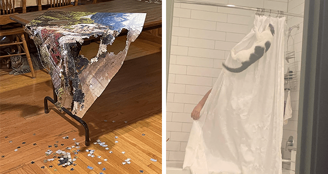 pictures of cats causing chaos thumbnail includes two pictures including one of a cat hanging off a shower curtain while someone is in the shower and another of a cat sitting behind a table with a destroyed puzzle on it