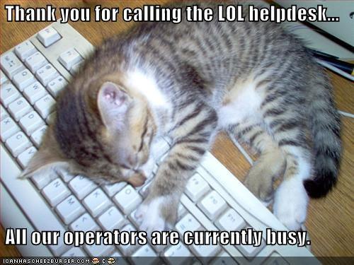 busy computer cute helpdesk keyboard kitten lol lolcats lolkittehs nap - 1405761280