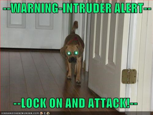 attack,beagle,eyes,intruder,laser,mixed breed,pug,warning