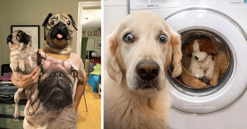 photos of pets that have been surprised