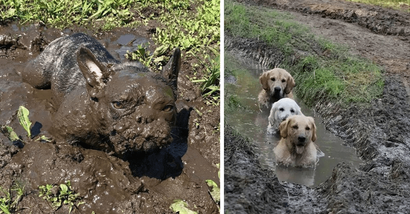 12 pictures of dogs frolicking in mud