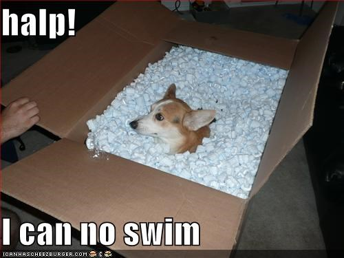 box,corgi,FAIL,help,styrofoam peanuts,swimming