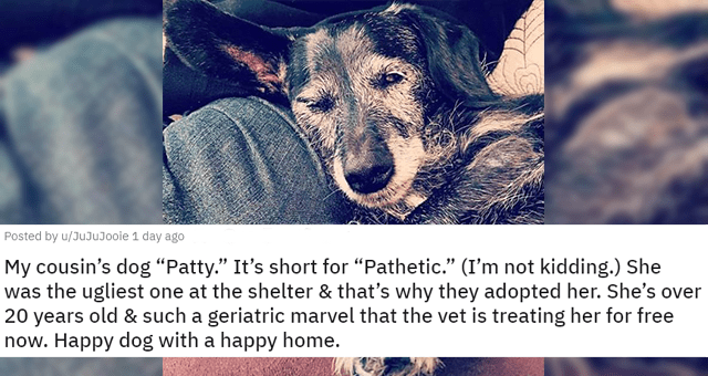 "posts of animals newly adopted this week thumbnail includes a picture of an 'ugly' dog 'My cousin's dog ""Patty."" It's short for ""Pathetic."" (I'm not kidding.) She was the ugliest one at the shelter & that's why they adopted her. She's over 20 years old & such a geriatric marvel that the vet is treating her for free now. Happy dog with a happy home. u/JuJuJooie'"
