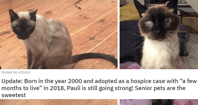 """posts of animals before and after adoption thumbnail includes two pictures including a sick-looking blind cat and a healthy-looking senior cat 'Update: Born in the year 2000 and adopted as a hospice case with """"a few months to live"""" in 2018, Pauli is still going strong! Senior pets are the sweetest u/Dootz'"""