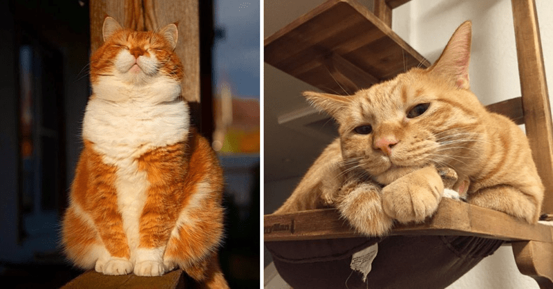 10 photos of cute ginger cats
