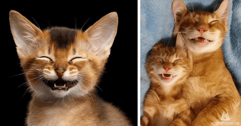 10 cute photos of happy cats
