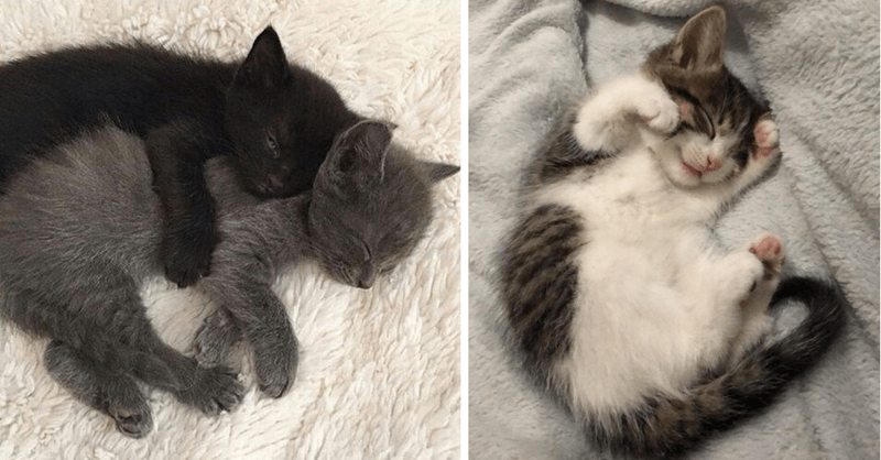11 cute pictures of kittens sleeping
