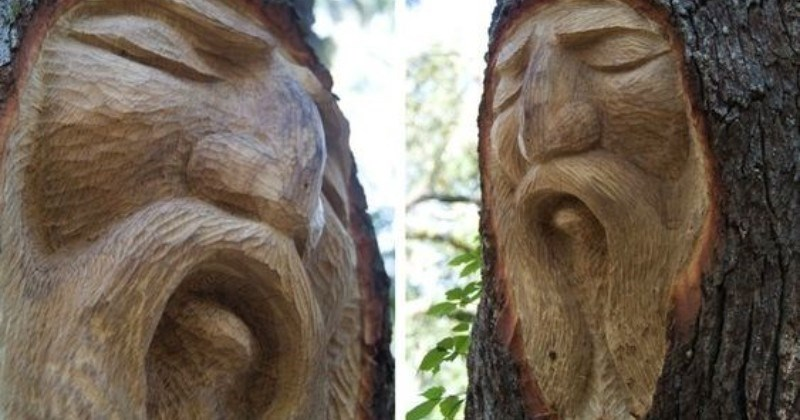 A collection of cool artistic engravings on trees.