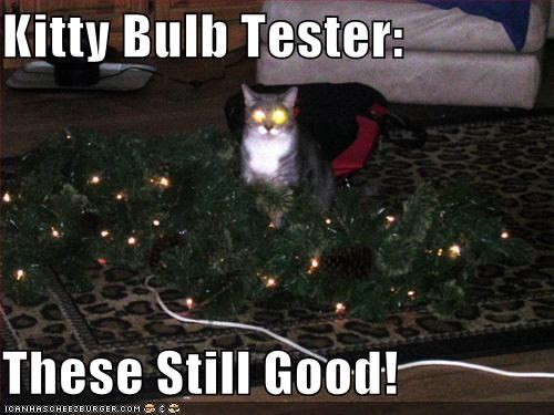 christmas lightbulbs lolcats tester tree - 1408974592