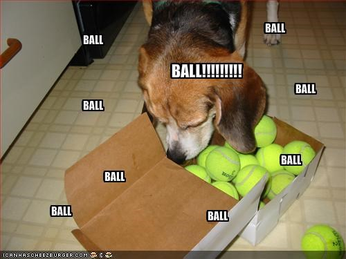 ball beagle box excited kitchen overwhelmed toys