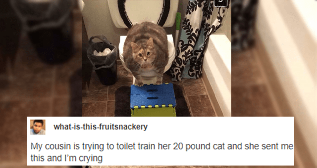 collection of funny tumblr posts about cats thumbnail includes a picture of a fat cat sitting on a toilet 'Photograph - what-is-this-fruitsnackery My cousin is trying to toilet train her 20 pound cat and she sent me this and I'm crying Source: what-is-this-fruitsnackery 177,727 notes ...'