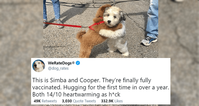 this week's collection of animal tweets thumbnail includes a picture of two puppies hugging and one tweet 'Jeans - WeRateDogs® @dog_rates ... This is Simba and Cooper. They're finally fully vaccinated. Hugging for the first time in over a year. Both 14/10 heartwarming as h*ck 12:24 AM Apr 16, 2021 Twitter for iPhone 49K Retweets 3,030 Quote Tweets 332.8K Likes'