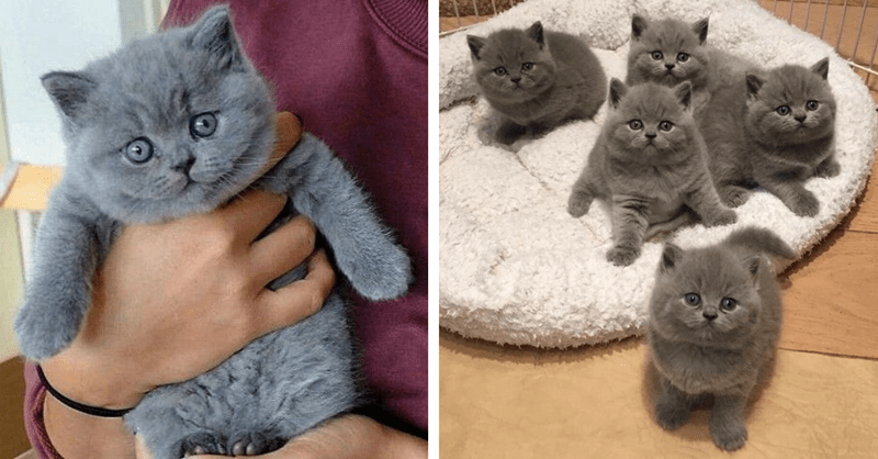 pictures of sweet baby kittens