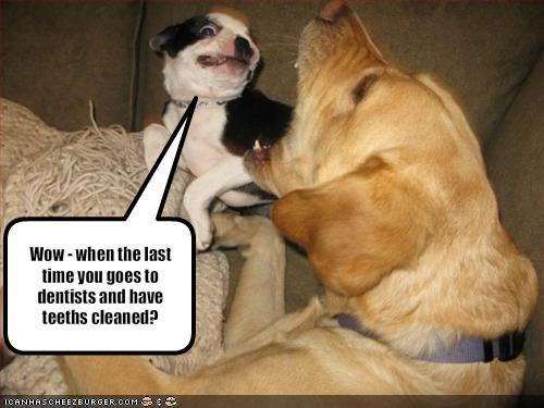 boston terrier dentist gross labrador teeth - 1409691392