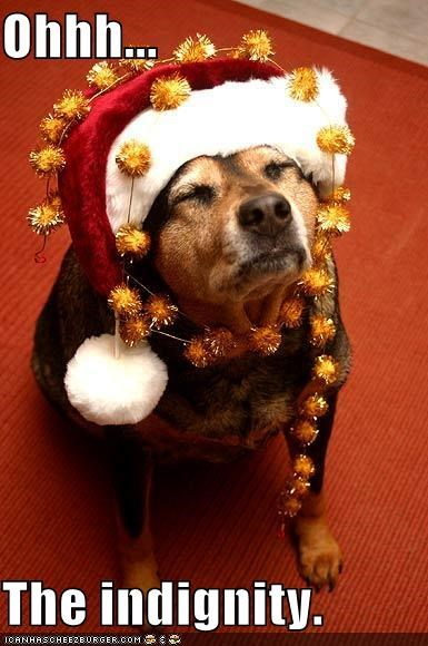 beagle christmas costume dignity santa - 1409926912