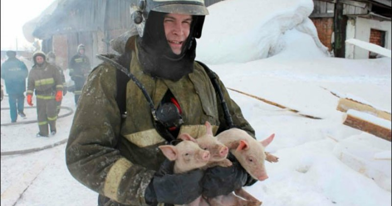 list pig cute animals - 1410053