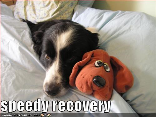 speedy recovery - Cheezburger - Funny Memes | Funny Pictures