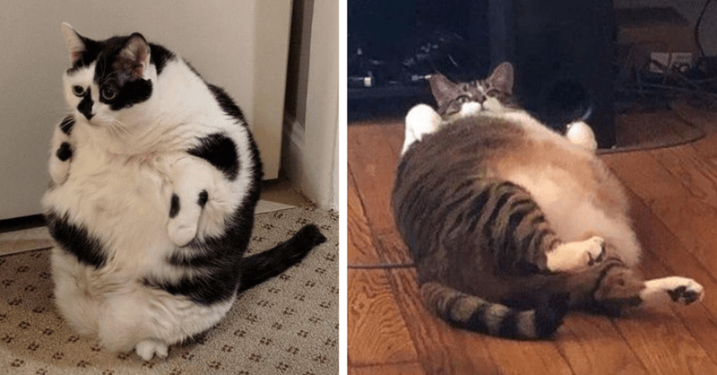 10 pictures of chinky cats