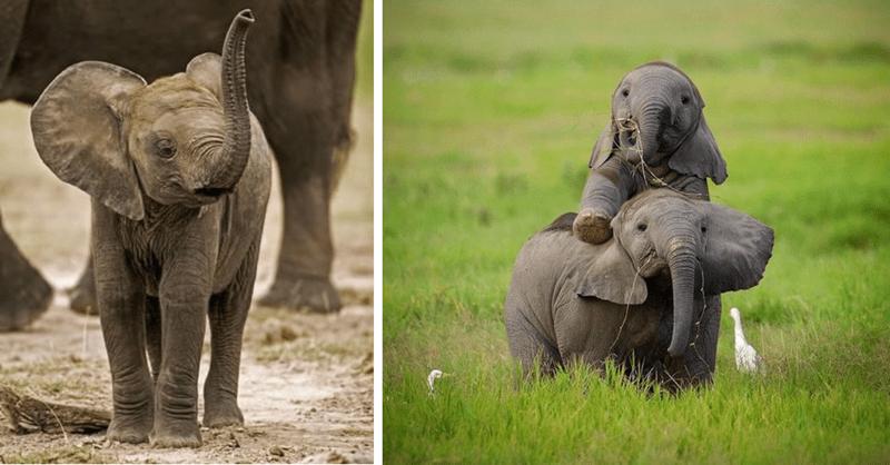 9 photos of baby elepants
