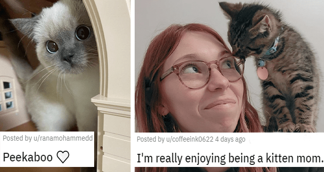 a collection of posts about cats thumbnail includes two pictures including a cat hiding behind a wall 'Peekaboo u/ranamohammedd' and a kitten sitting on a woman's shoulder 'I'm really enjoying being a kitten mom. u/coffeeink0622'