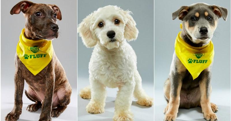 list,puppy,cute,animals