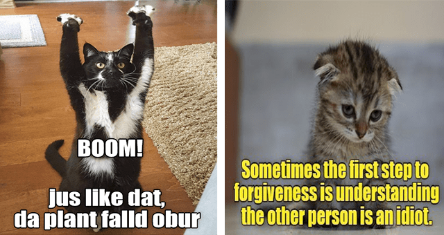 ichc original cat memes lolcats thumbnail includes two memes including a cat standing on two legs and raising its hands 'Cat - BOOM! jus like dat, da plant falld obur' and another of a sad kitten 'Cat - Sometimes the first step to forgiveness is understanding the other person is an idiot. ICANHASCHEEZBURGER.COM'