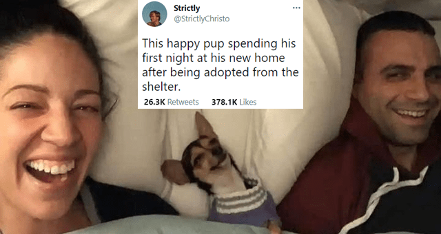 collection of funny and wholesome dog tweets thumbnail includes one picture of a smiling puppy tucked in bed with its owners and one tweet 'Smile - Strictly @StrictlyChristo ... This happy pup spending his first night at his new home after being adopted from the shelter. 8:28 AM - Apr 17, 2021 - Twitter Web App 26.3K Retweets 2,111 Quote Tweets 378.1K Likes'