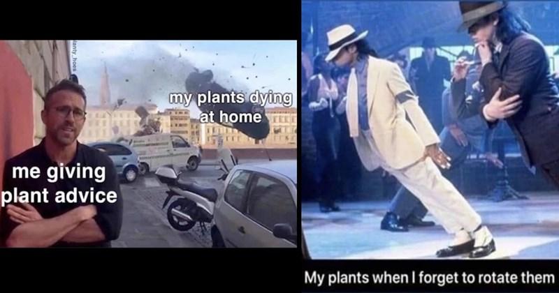 plant memes, house plants, gardening, plants, nature memes, funny memes, relatable memes, wholesome, botanical memes, memes, funny tweets, funny