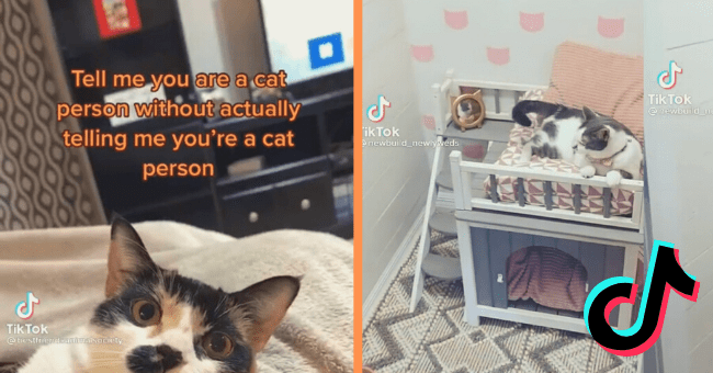 'Tell Me You're A Cat Person Without Telling Me You're A Cat Person' - A New TikTok Trend| thumbnail text - Tell me you are a cat person without actually telling me you're a cat person Tik Tok @ bestfriendsanimaisociety 6714
