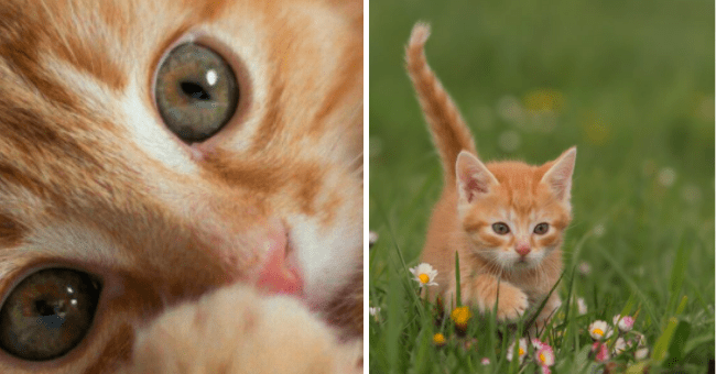 Cute pictures of ginger kittens | thumbnail text - ginger kittens