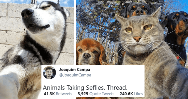 viral twitter thread of pictures of animals taking selfies | thumbnail includes two pictures including a dog taking a selfie and a cat taking a selfie of itself and three dogs 'Cat - Joaquim Campa @JoaquimCampa ... Animals Taking Seflies. Thread. 9:53 PM Apr 24, 2021 - Twitter Web App 41.2K Retweets 3,914 Quote Tweets 239.7K Likes'