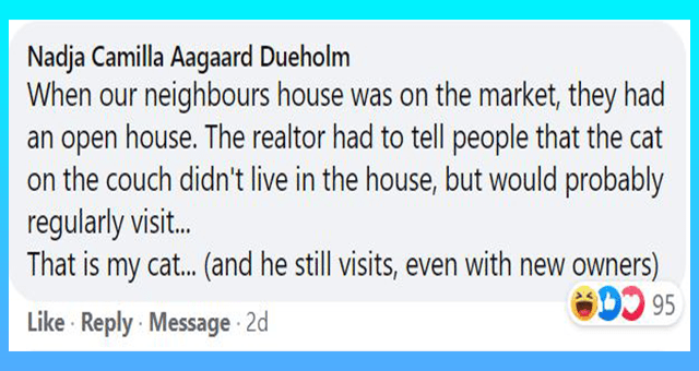 Facebook comments with funny stories about the neighbors cats | thumbnail includes one Facebook comment 'Rectangle - Nadja Camilla Aagaard Dueholm When our neighbours house was on the market, they had an open house. The realtor had to tell people that the cat on the couch didn't live in the house, but would probably regularly visit.. That is my cat.. (and he still visits, even with new owners) D 95 Like Reply Message 2d'