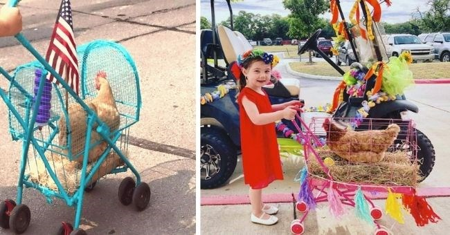 people are making strollers to take their chickens for a walk | thumbnail includes two pictures of chickens in strollers