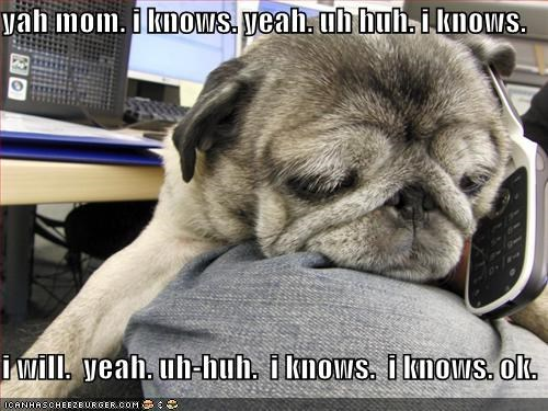 annoying boring mom phone pug talking - 1415660288