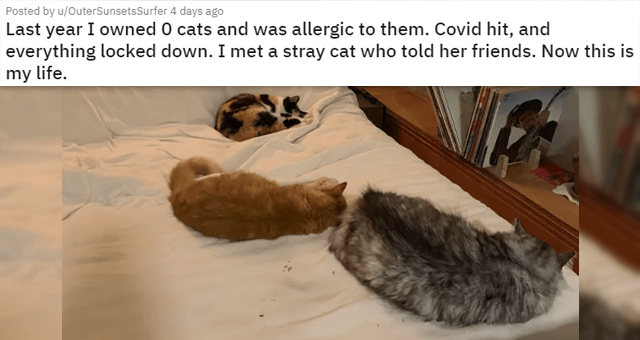 a collection of posts about cats | thumbnail includes a picture of three cats on a bed 'Last year I owned 0 cats and was allergic to them. Covid hit, and everything locked down. I met a stray cat who told her friends. Now this is my life. u/OuterSunsetsSurfer'