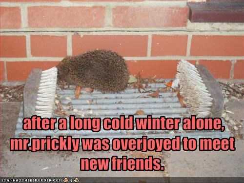 alone cute friends lolhedgehog lolhedgehogs winter