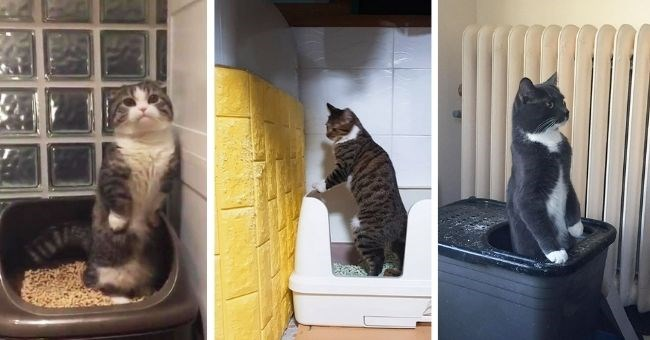 cats who poop standing up have zero cares and all the chill | thumbnail includes three pictures of cats pooping standing up