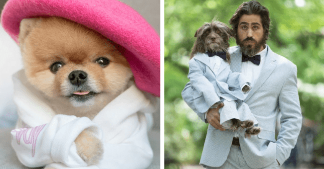 Doggos Who Probably Have Better Style Than You, But It's Okay| thumbnail text - dog, face, man holding dog
