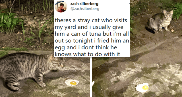 twitter thread about a guy who feeds stray cats running out of food and giving them a fried egg | thumbnail includes two pictures of a cat next to a fried egg and one tweet 'Ecoregion - zach silberberg ... @zachsilberberg theres a stray cat who visits my yard and i usually give him a can of tuna but i'm all out so tonight i fried him an egg and i dont think he knows what to do with it'