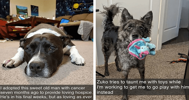 collection of wholesome dog Snapchats | thumbnail includes two snaps 'Dog - I adopted this sweet old man with cancer seven months ago to provide loving hospice. He's in his final weeks, but as loving as ever.' and 'Dog - Zuko tries to taunt me with toys while I'm working to get me to go play with him instead'