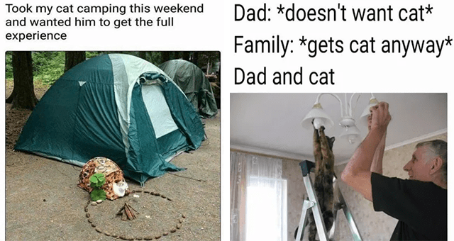collection of wholesome cat memes | thumbnail includes two memes including a cat with its own tent in a campsite 'Green - Took my cat camping this weekend and wanted him to get the full experience' and a cat helping a man fix a lamp 'Gesture - Dad: *doesn't want cat* Family: *gets cat anyway* Dad and cat'