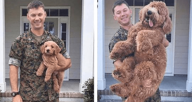 pictures of animal glow ups | thumbnail includes two pictures including a soldier holding a puppy and a soldier holding a huge dog