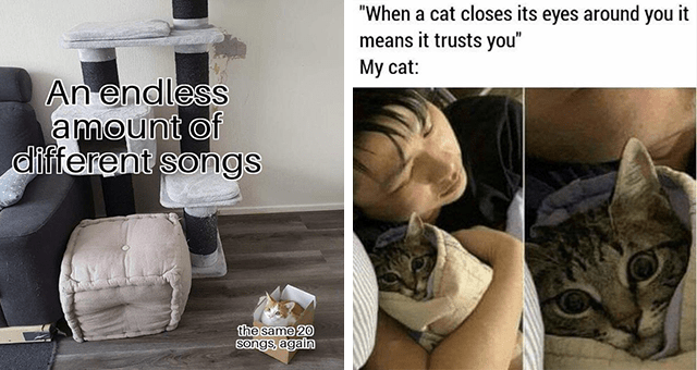 "Caturday cat memes | thumbnail includes two memes including a cat choosing a box over a cat tree 'Comfort - An endless amount of different songs the same 20 songs, again' and a scared looking cat hugged by a person 'Nose - ""When a cat closes its eyes around you it means it trusts you"" Му cat:'"
