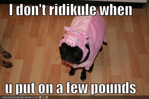 costume,lolpigs,pig,pug,weight
